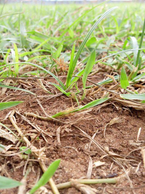 Des herbes poussées sur une terre ©felixtagba